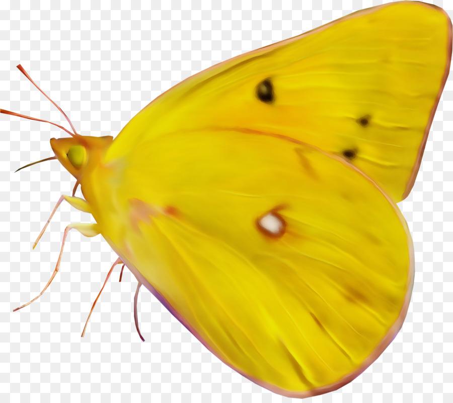 Descarga gratuita de Nublado Amarillos, Brushfooted Mariposas, Mariposa imágenes PNG