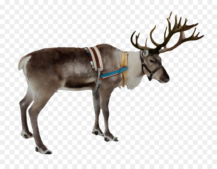 Descarga gratuita de Los Ciervos, Rudolph, Santa Claus Imágen de Png