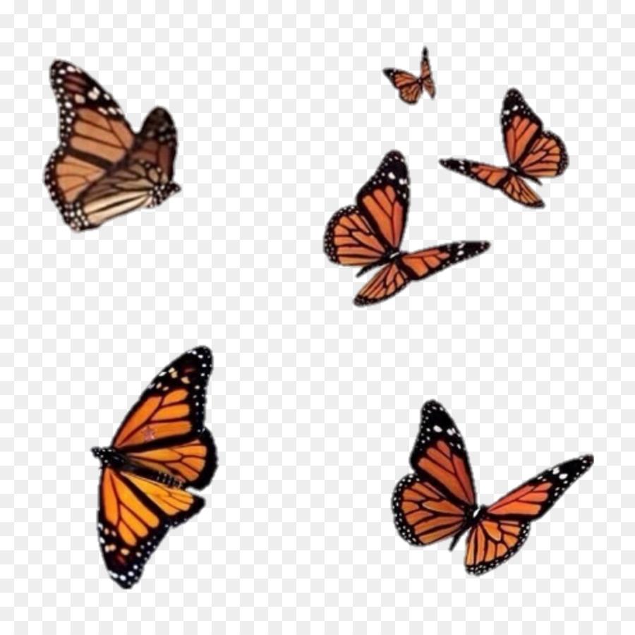Descarga gratuita de Mariposa, Los Insectos, Brushfooted Mariposas Imágen de Png