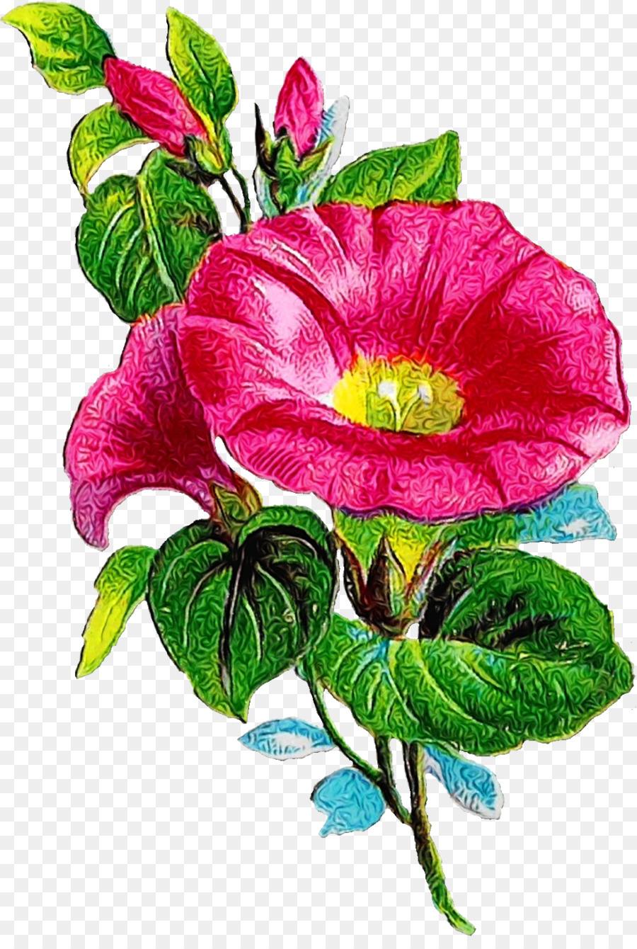 Descarga gratuita de Gloria De La Mañana, Col Rosa, Las Rosas De Jardín Imágen de Png