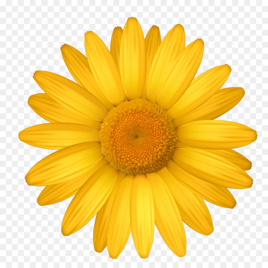 Descarga gratuita de Común Daisy, Flor, Transvaal Daisy imágenes PNG