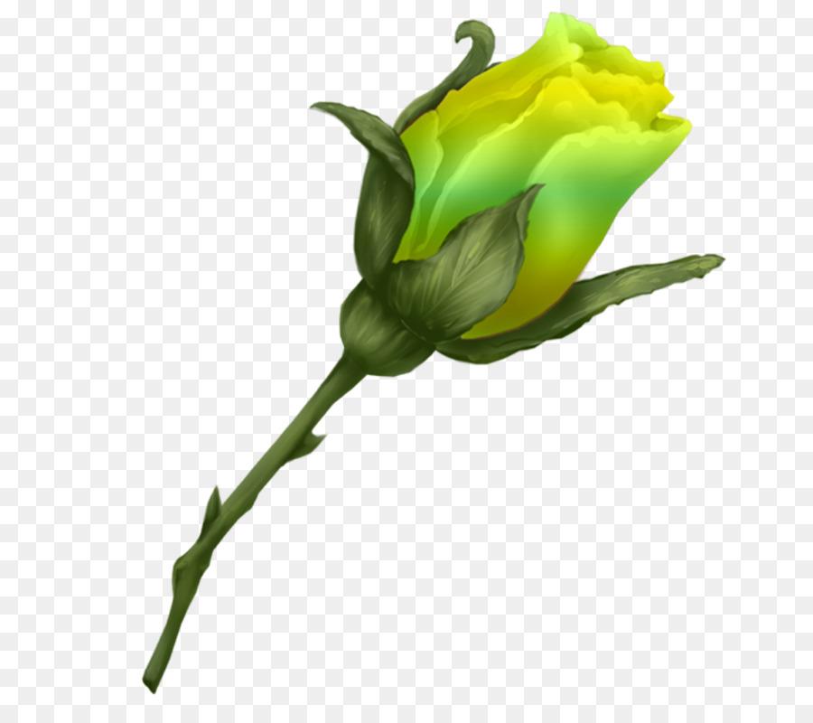 Descarga gratuita de Col Rosa, Flor, Las Rosas De Jardín imágenes PNG