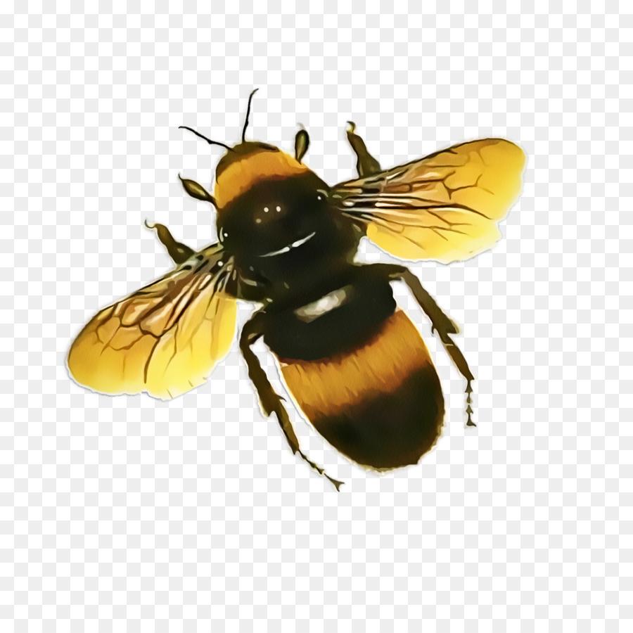 Descarga gratuita de La Miel De Abeja, Abeja, Los Insectos imágenes PNG