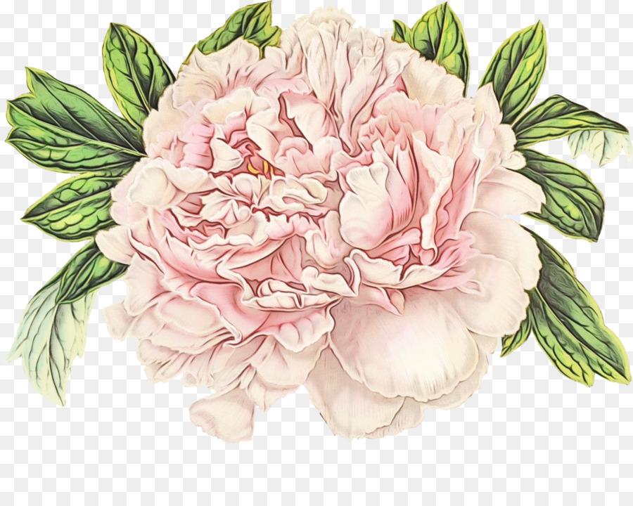 Descarga gratuita de La Floración De La Planta, Flor, Rosa Imágen de Png