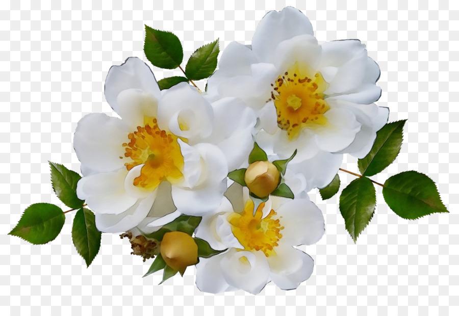 Descarga gratuita de Flor, La Floración De La Planta, Pétalo imágenes PNG