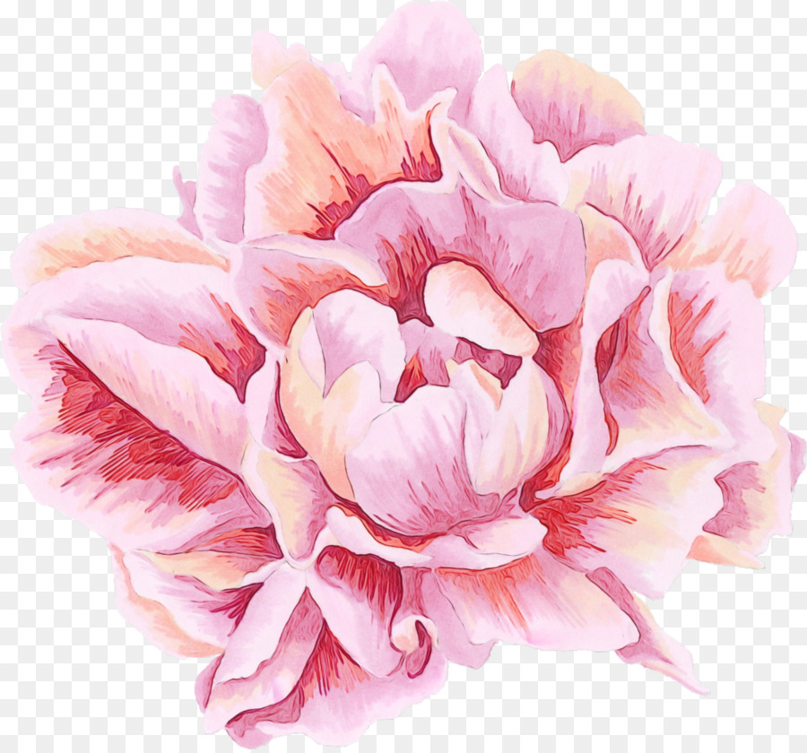 Descarga gratuita de Pétalo, Rosa, Flor Imágen de Png