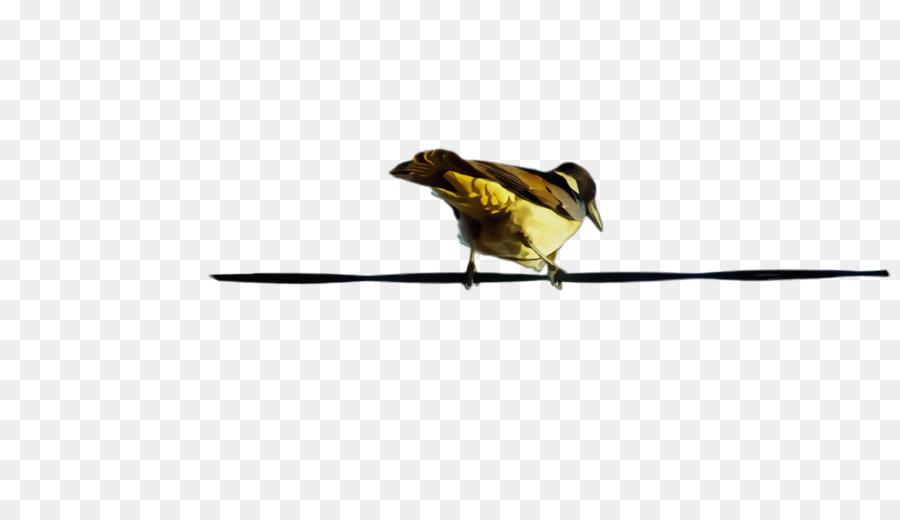 Descarga gratuita de Aves, Pico, Finch Imágen de Png