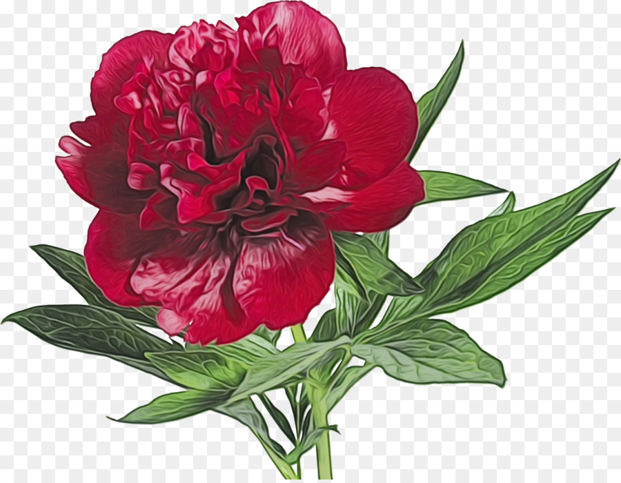 Descarga gratuita de Flor, La Floración De La Planta, Planta Imágen de Png