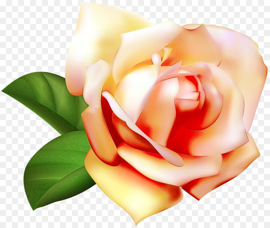 Descarga gratuita de Las Rosas De Jardín, Pétalo, Flor Imágen de Png