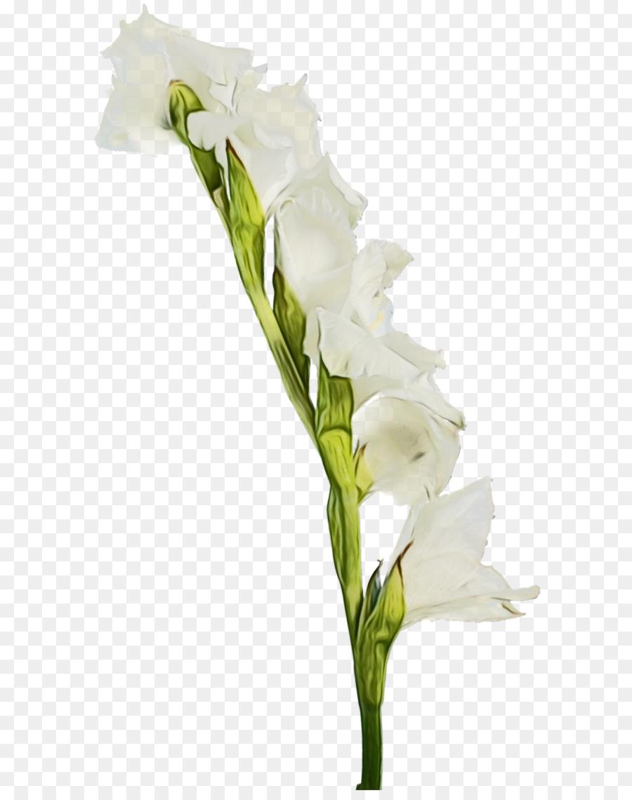 Descarga gratuita de Flor, La Floración De La Planta, Blanco Imágen de Png