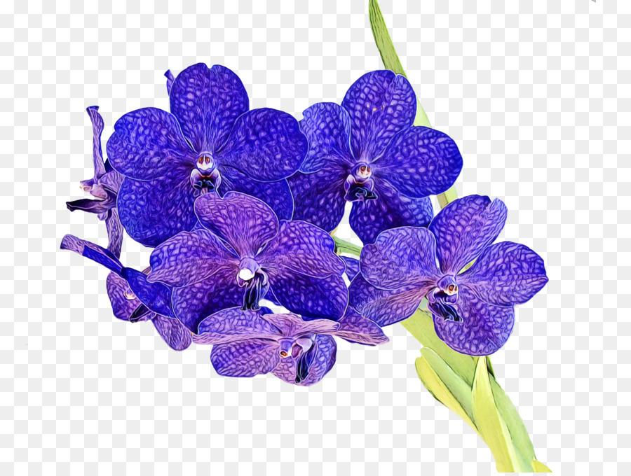 Descarga gratuita de Flor, La Floración De La Planta, Violeta imágenes PNG