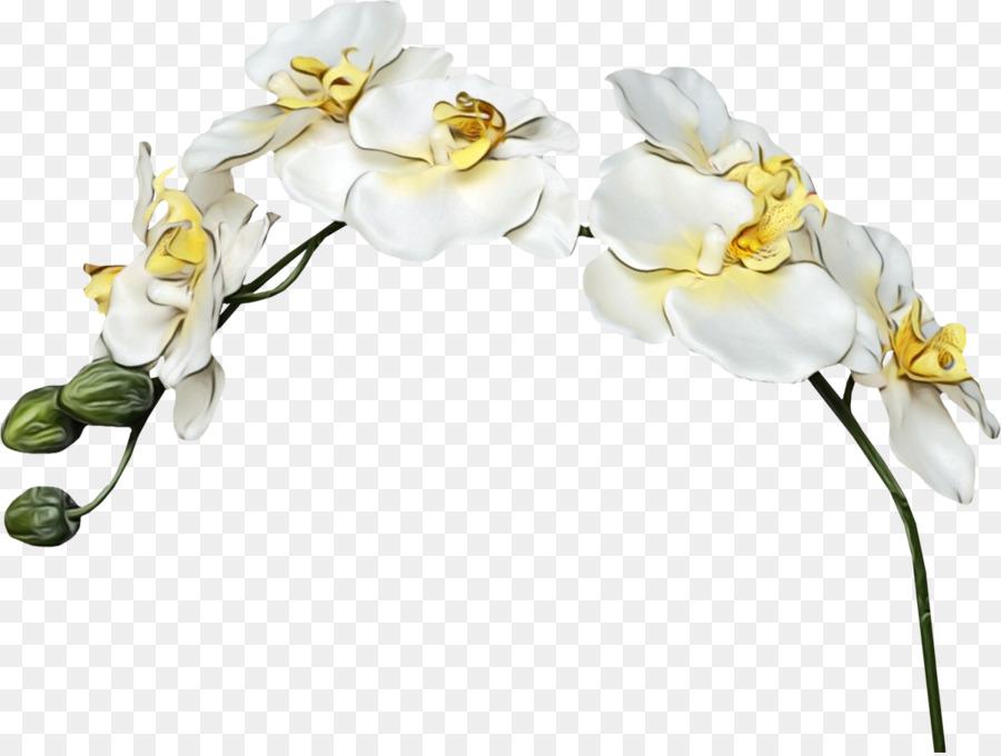 Descarga gratuita de La Polilla De La Orquídea, Flor, Las Flores Cortadas imágenes PNG
