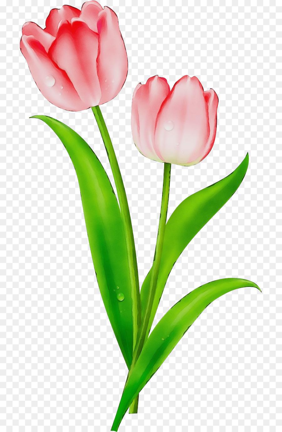 Descarga gratuita de Tulip, La Floración De La Planta, Flor Imágen de Png