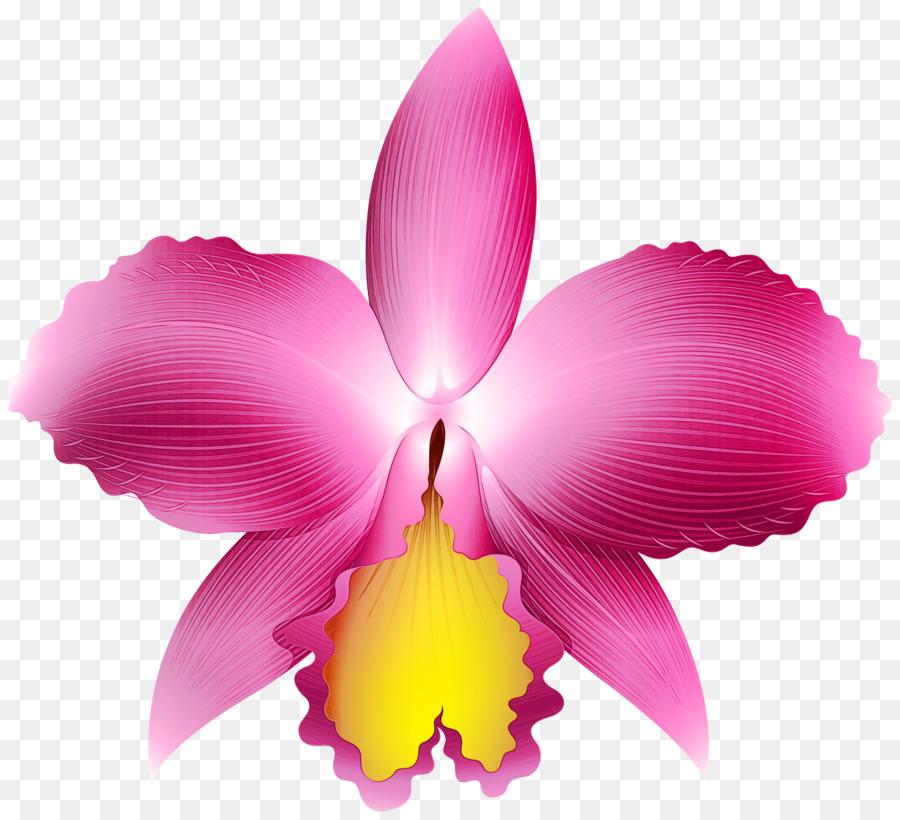 Descarga gratuita de La Floración De La Planta, Pétalo, Flor Imágen de Png