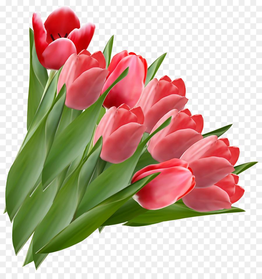 Descarga gratuita de Flor, Tulip, La Floración De La Planta Imágen de Png