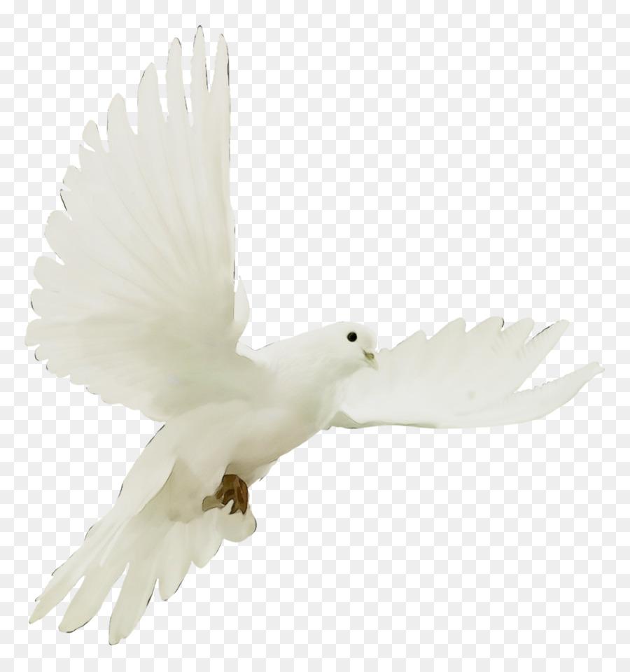 Descarga gratuita de Blanco, Aves, Ala Imágen de Png