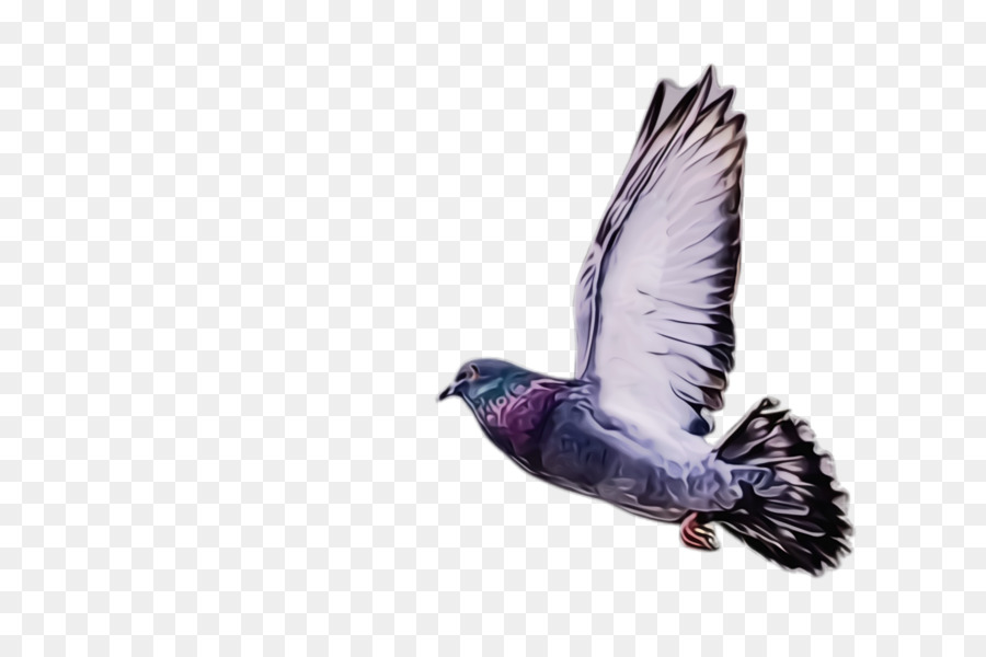 Descarga gratuita de Aves, Pico, Ala Imágen de Png