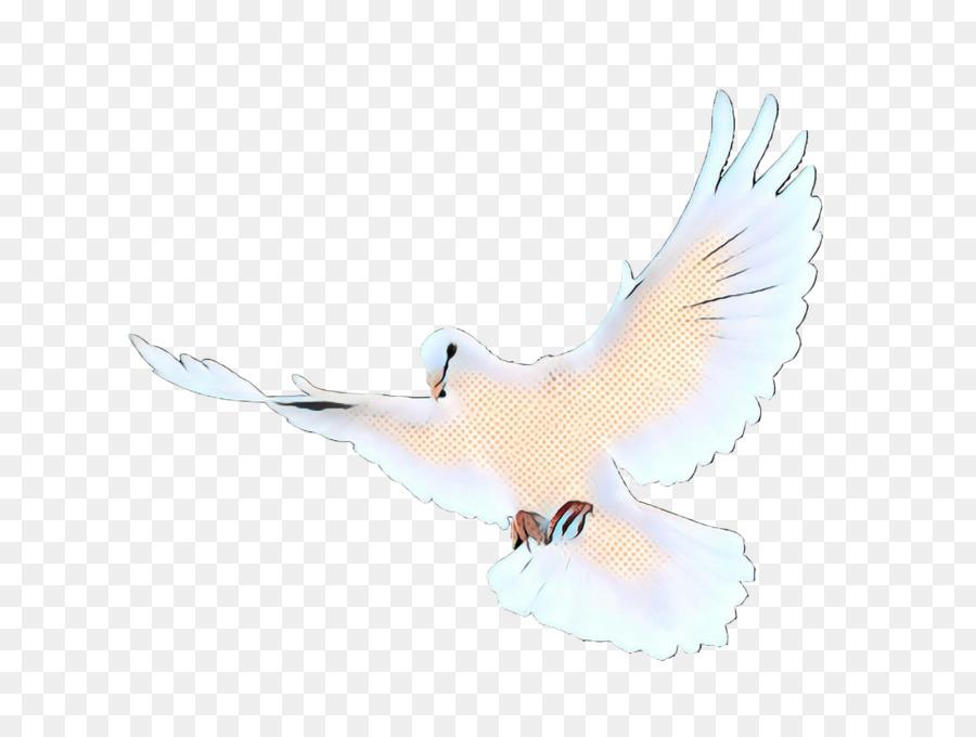 Descarga gratuita de Aves, Ala, Las Palomas Y Las Palomas Imágen de Png