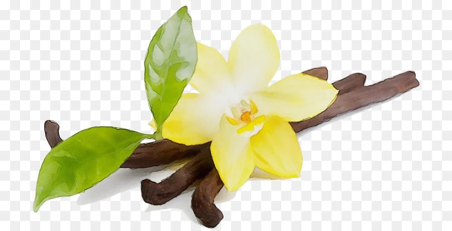 Descarga gratuita de Flor, Amarillo, Planta Imágen de Png