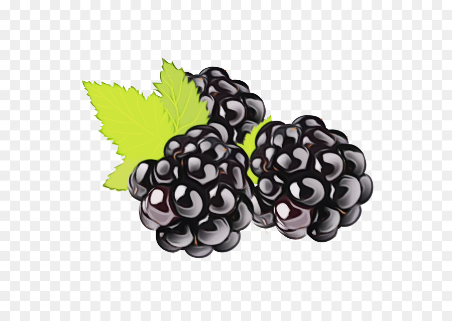 Descarga gratuita de Uva, La Fruta, Blackberry Imágen de Png