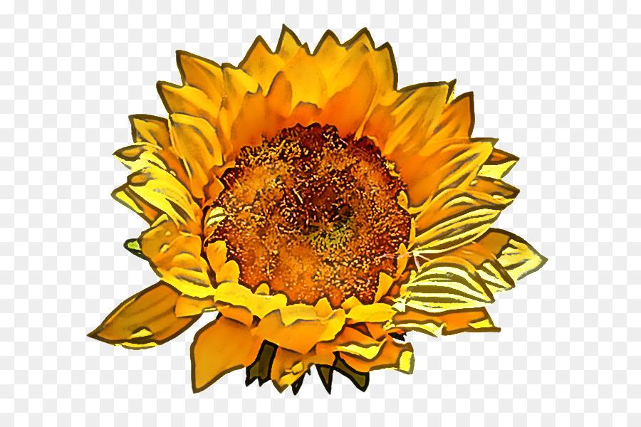 Descarga gratuita de Girasol, Flor, Amarillo Imágen de Png