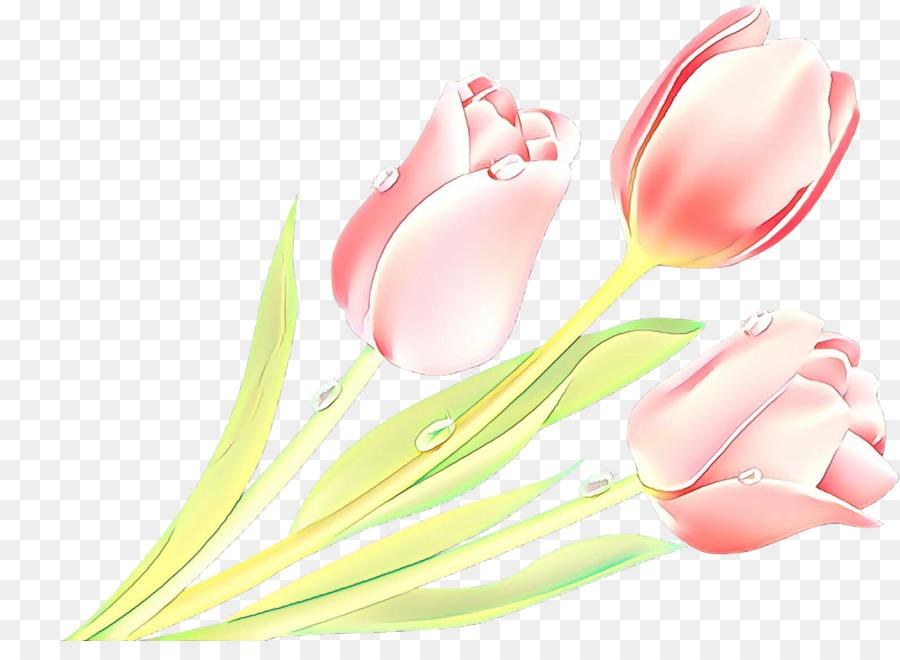 Descarga gratuita de Rosa, Tulip, Flor Imágen de Png