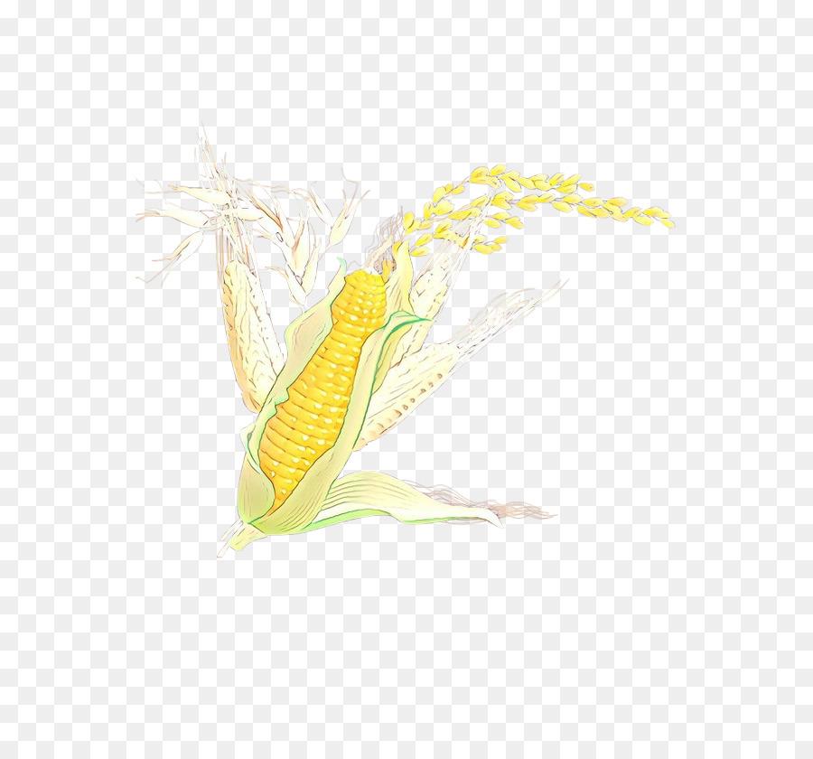 Descarga gratuita de El Maíz En La Mazorca, Amarillo, Maíz Dulce Imágen de Png