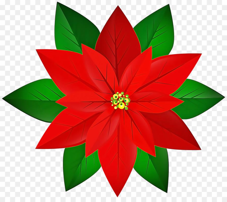 Descarga gratuita de Flor, Rojo, La Flor De Pascua imágenes PNG