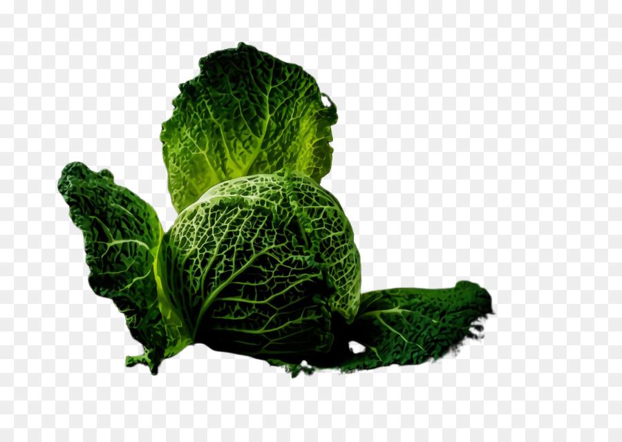 Descarga gratuita de Hoja, Vegetal, Planta Imágen de Png
