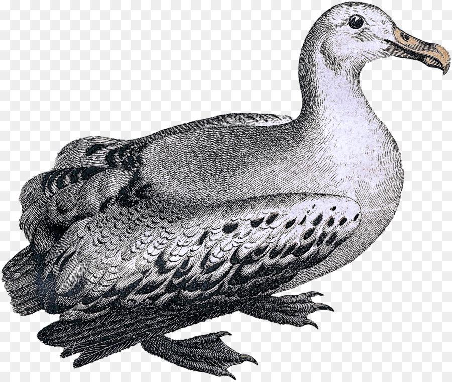 Descarga gratuita de Aves, Las Palomas Y Las Palomas, Pico Imágen de Png