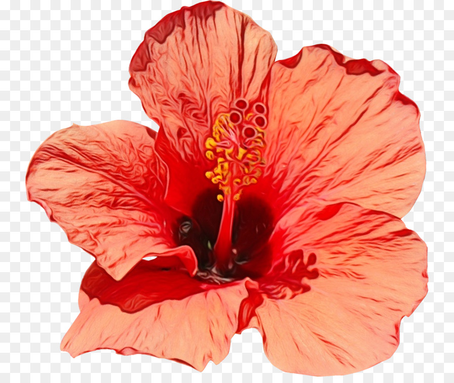 Descarga gratuita de Flor, La Floración De La Planta, Hibiscus Hawaiian Imágen de Png