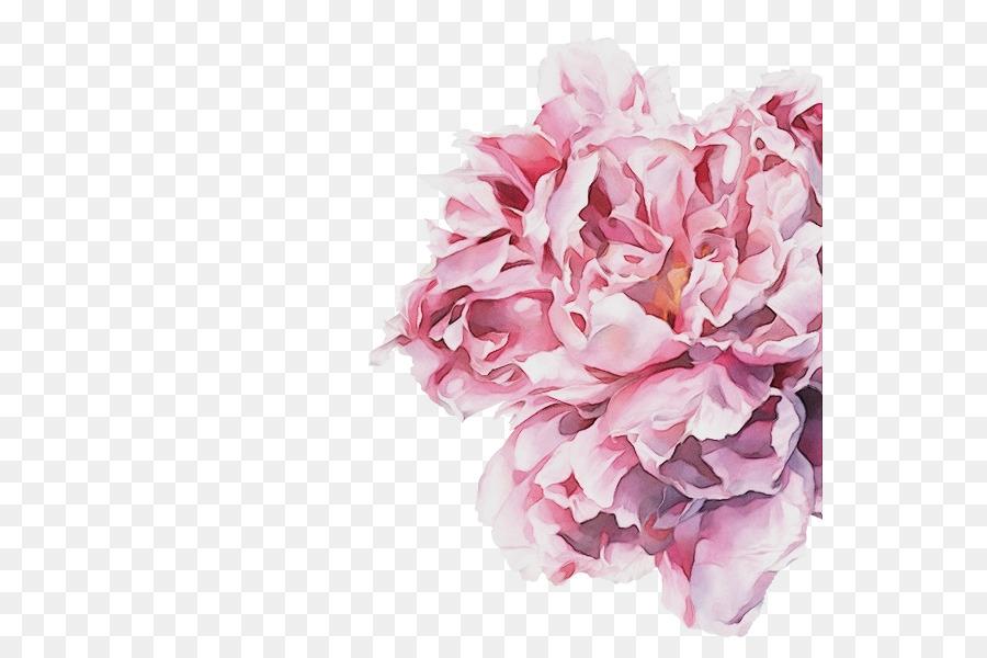 Descarga gratuita de Rosa, Flor, Las Flores Cortadas Imágen de Png