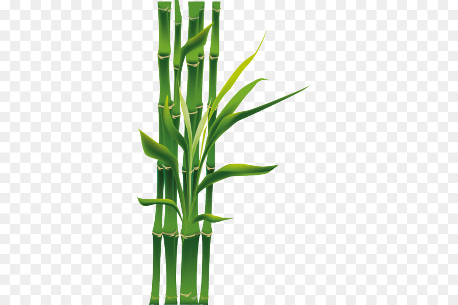 Descarga gratuita de Bambú, Verde, Planta Imágen de Png