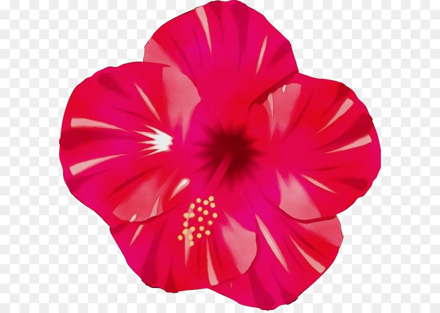 Descarga gratuita de Pétalo, Rosa, Hibiscus Hawaiian Imágen de Png