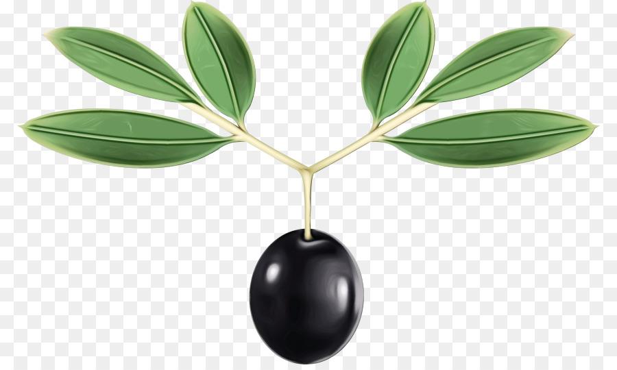 Descarga gratuita de De Oliva, Planta, árbol Imágen de Png