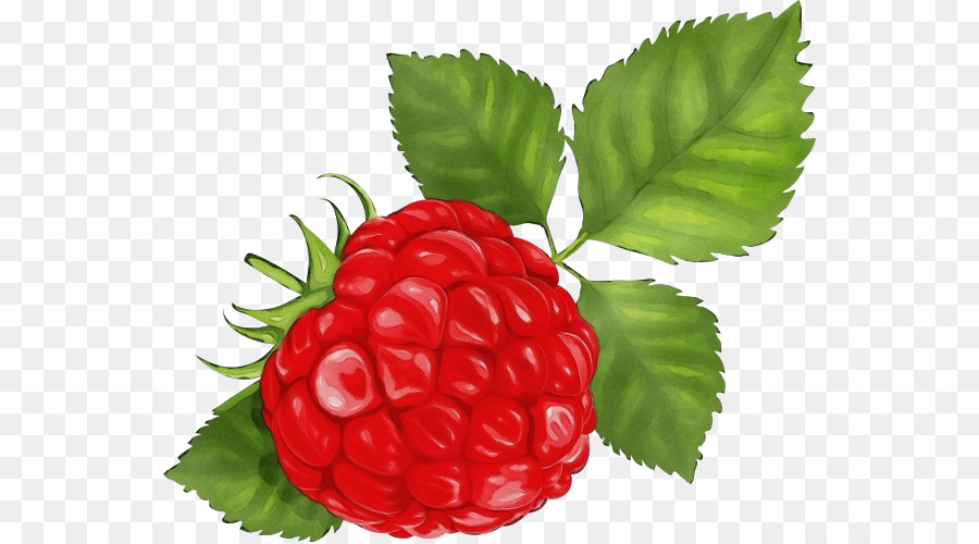 Descarga gratuita de Berry, Frambuesa, Rubus Imágen de Png
