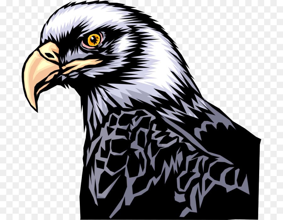 Descarga gratuita de Aves, águila, Ave De Presa Imágen de Png