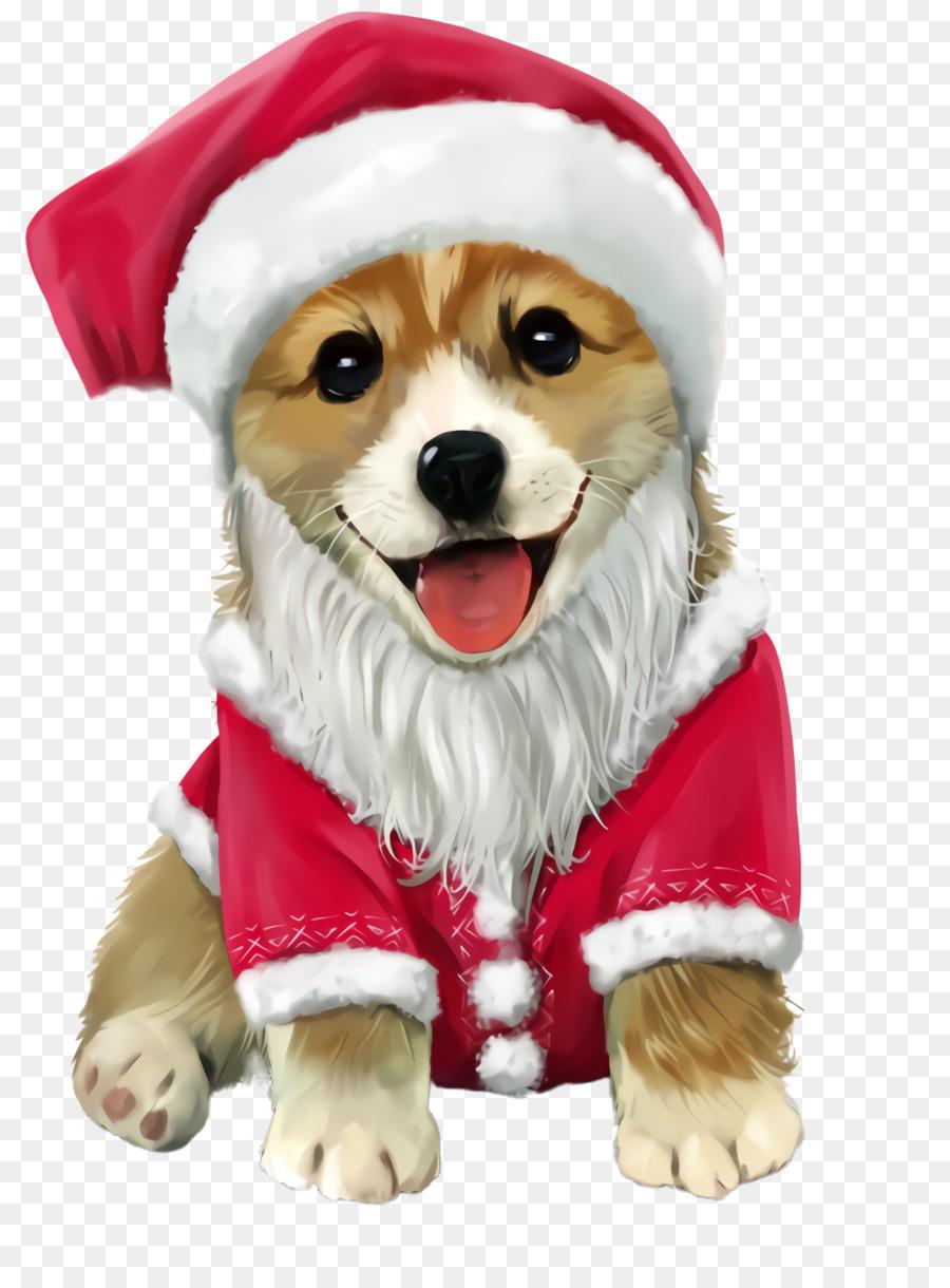 Descarga gratuita de Perro, Ropa De Perro, Raza De Perro Imágen de Png