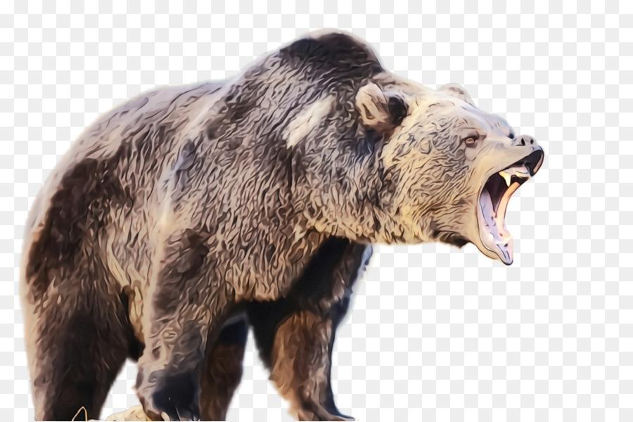 Descarga gratuita de Oso, Grizzly Bear, Los Animales Terrestres Imágen de Png