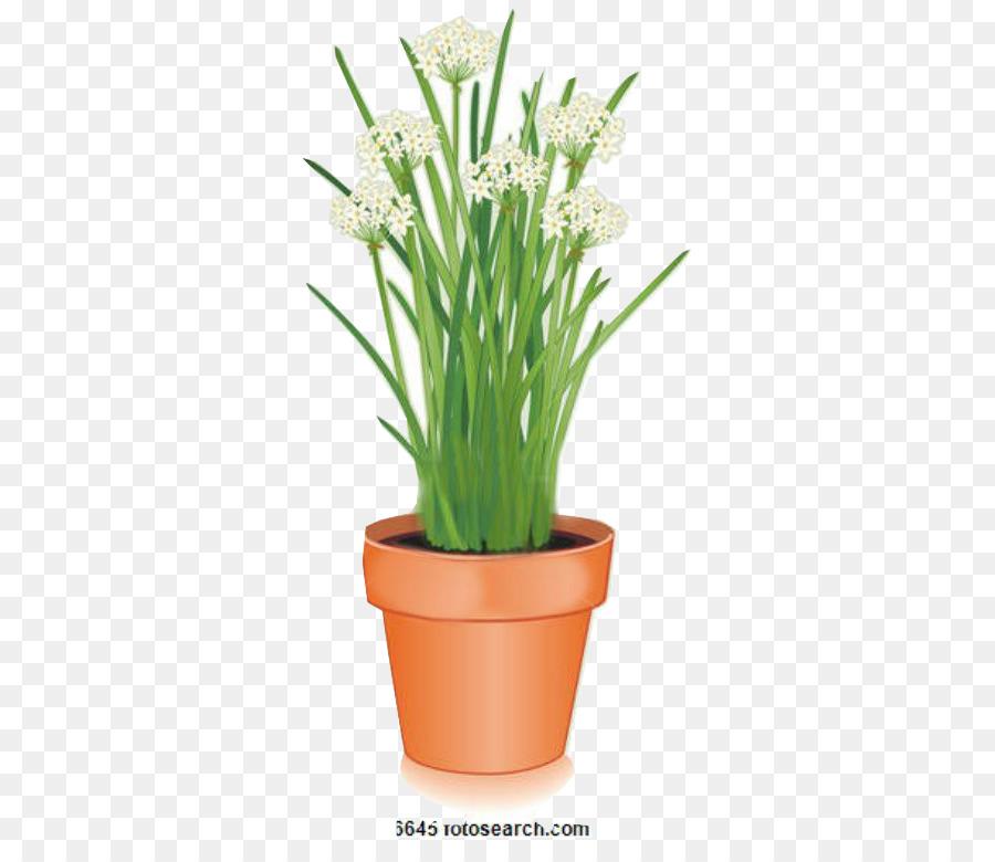 Descarga gratuita de Flor, La Floración De La Planta, Maceta Imágen de Png