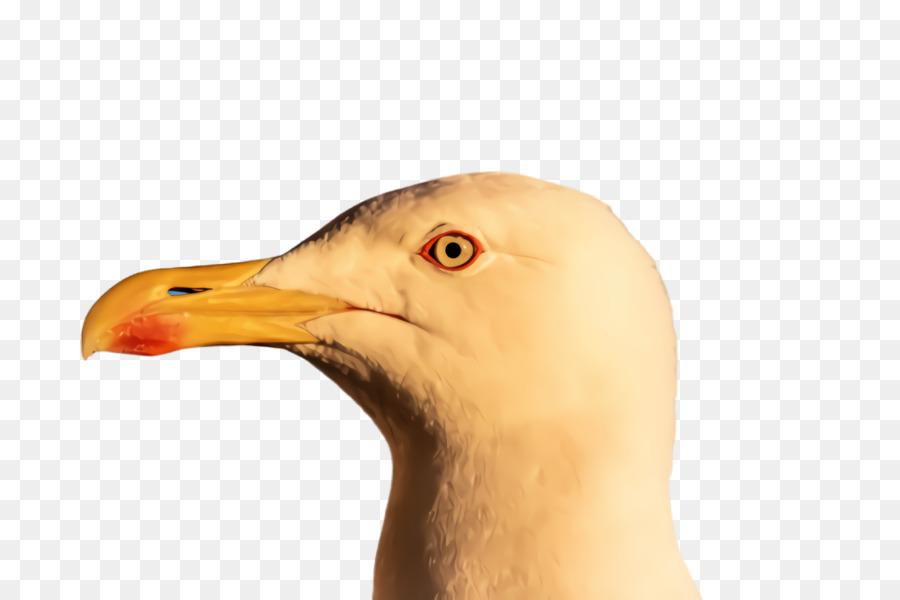 Descarga gratuita de Aves, Pico, Primer Plano Imágen de Png