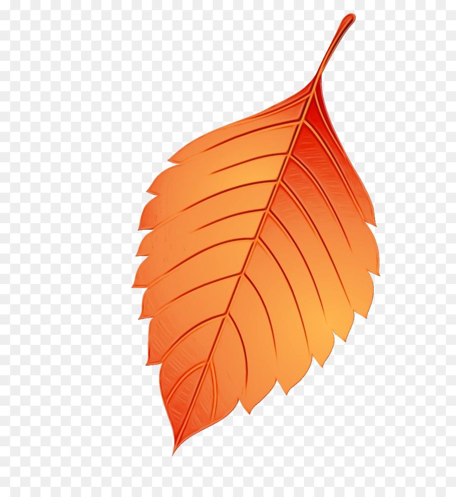 Descarga gratuita de Hoja, Naranja, Planta imágenes PNG