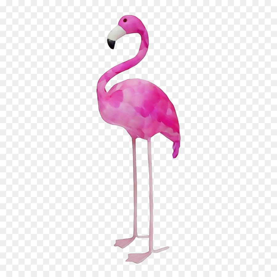 Descarga gratuita de Flamingo, Aves, Flamenco Imágen de Png