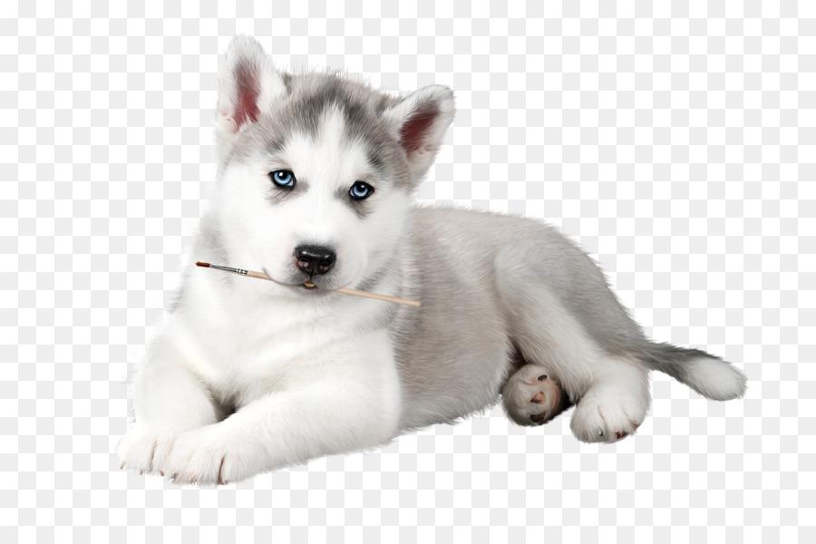 Descarga gratuita de Husky Siberiano, Perro, Blanco Imágen de Png