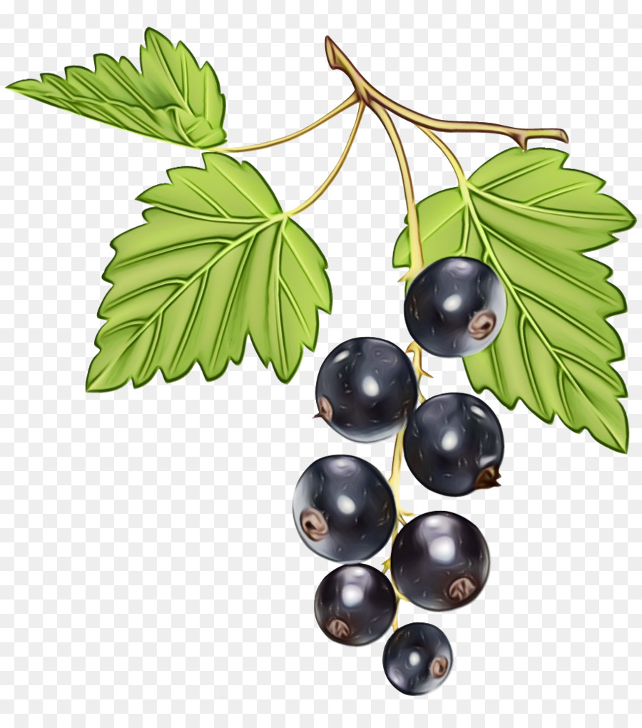 Descarga gratuita de Berry, Planta, Hoja Imágen de Png