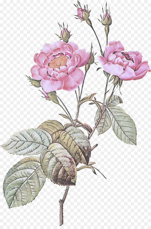 Descarga gratuita de Flor, La Floración De La Planta, Espinosa De La Rosa Imágen de Png