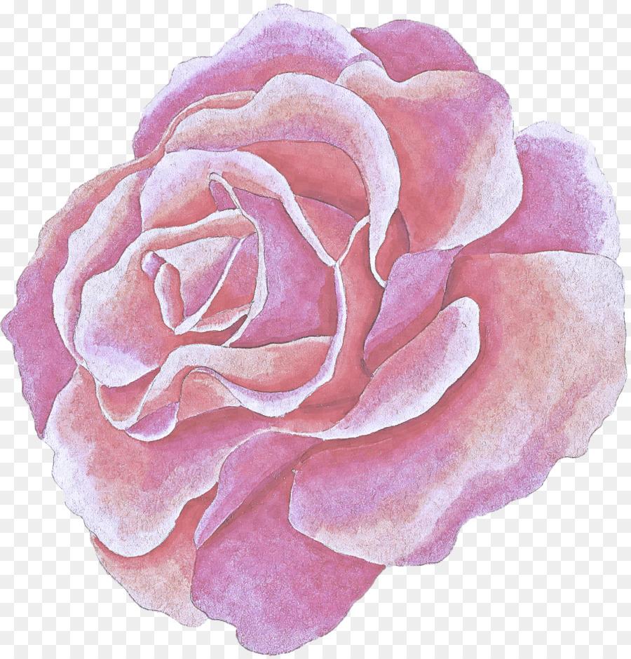Descarga gratuita de Rosa, Las Rosas De Jardín, Pétalo Imágen de Png