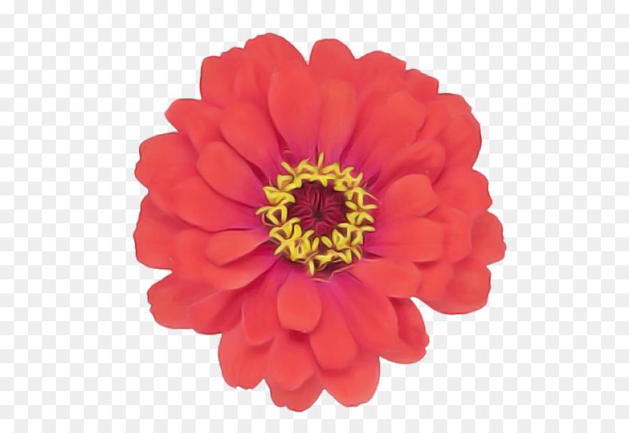 Descarga gratuita de Flor, Pétalo, Gerbera imágenes PNG