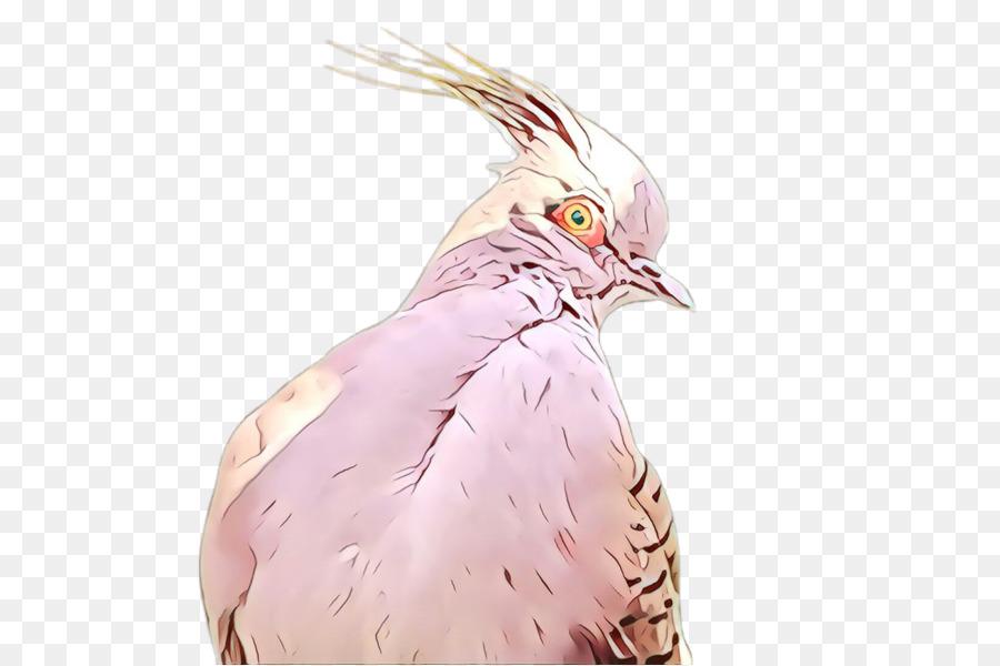 Descarga gratuita de Aves, Rosa, Pico Imágen de Png