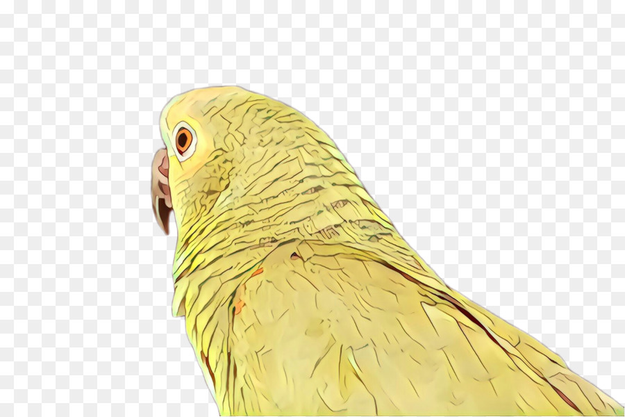Descarga gratuita de Aves, Pico, Parakeet Imágen de Png